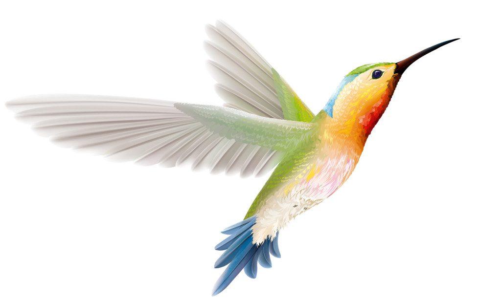 google-hummingbird-1024x614